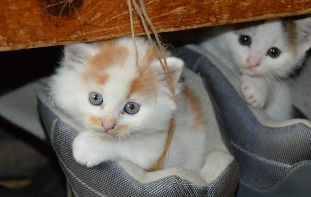 Erstklassiges Trockenfutter für die individuelle Ernährung von Katzen