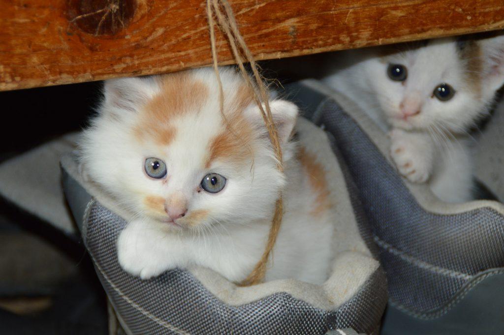 Katzenfutter von Royal Canin