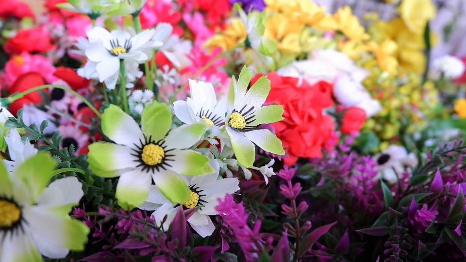 Was Blumen alles können – Fakten